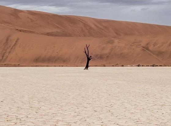 Comisiones para la Gestión de la Sequía