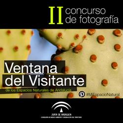 Concurso de Fotografía Pinterest