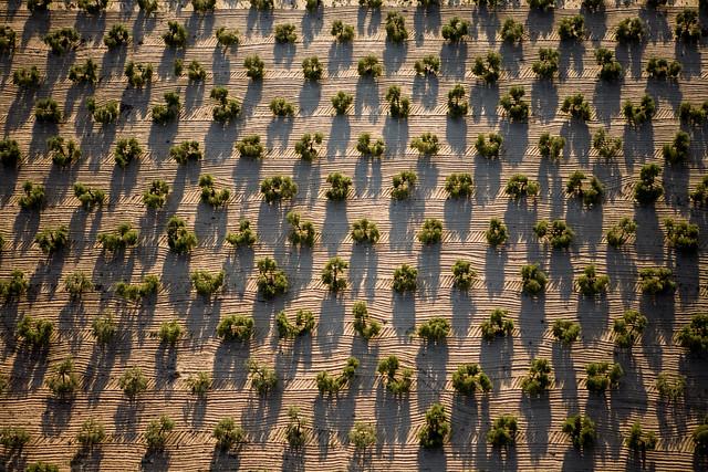 Fotografía aérea olivar