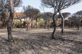 Incendio de Las Peñuelas, Moguer (Huelva)