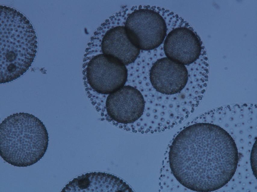 Investigación micológica