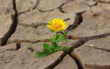 Planes Especiales de actuación en situaciones de alerta y eventual sequía