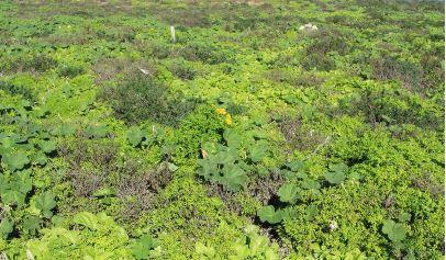 Estado de la vegetación
