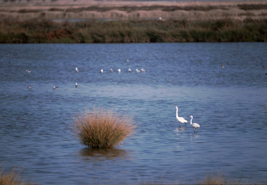 Centro de Análisis y Diagnóstico de la Fauna Silvestre de Andalucía (CAD)