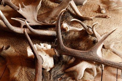 Comisión de homologación de troféos de caza en Andalucía