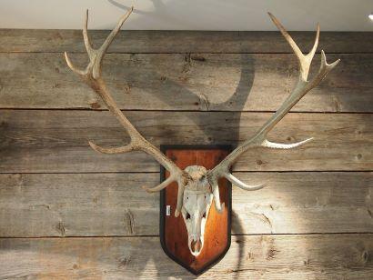 Resultados de las homologaciones de trofeos de caza mayor en Andalucía
