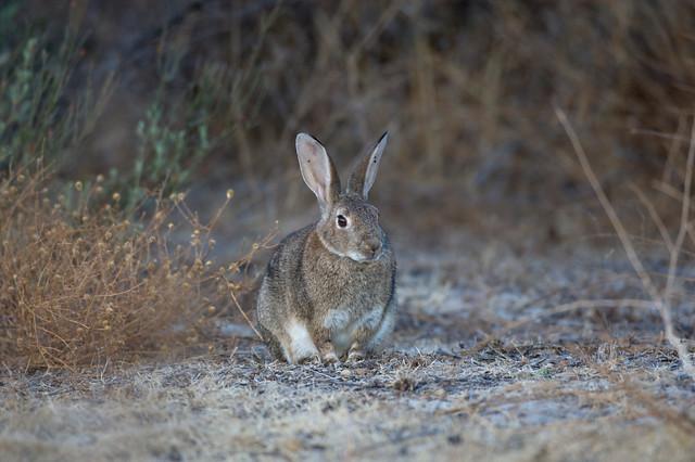 Programa de vigilancia epidemiológica de la fauna silvestre en Andalucía (PVE)