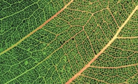 Datos básicos de Medio Ambiente en Andalucía. Edición 2001