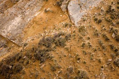 Tipos de terrenos cinegéticos