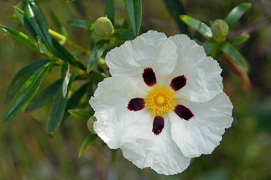 Imagen de Localización de taxones botánicos de interés para la identificación de hábitats de Andalucía