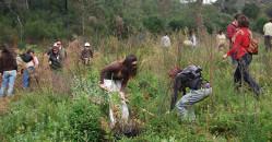 Voluntariado ambiental: restauración por incendio de las Peñuelas