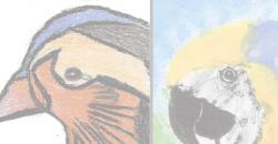 Concurso de Pintura de Aves (2019)