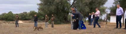 Liberación de un lince ibérico en Doñana