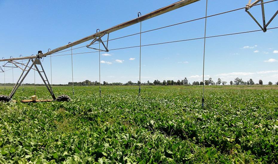 Ayudas de eficiencia energética para el sector agropecuario y de regadío