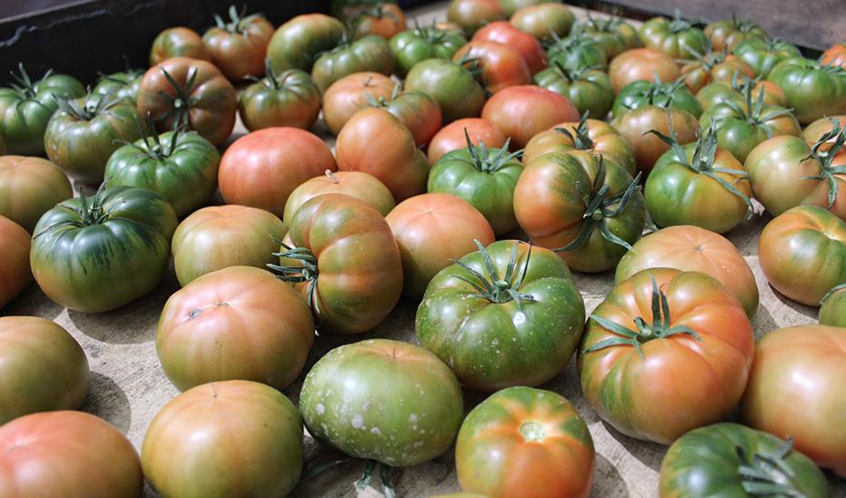 Existen multitud de variedades de tomates 'hechos' en Andalucía: pera, cherry, larga vida, asurcado, raf...