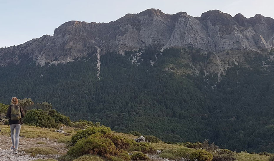 Una senderista camina por la Sierra de Grazalema, con el pinsapar al fondo.