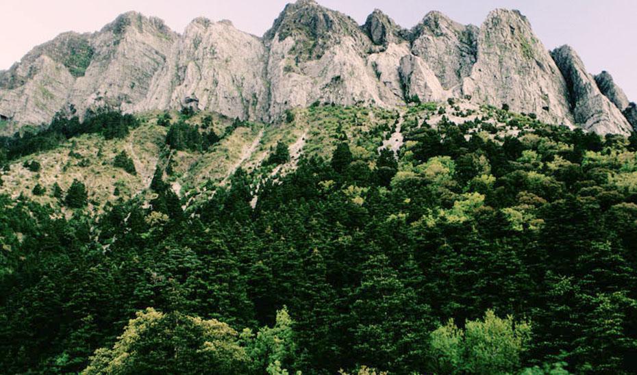 Panorámica del pinsapar en la Sierra de Grazalema.