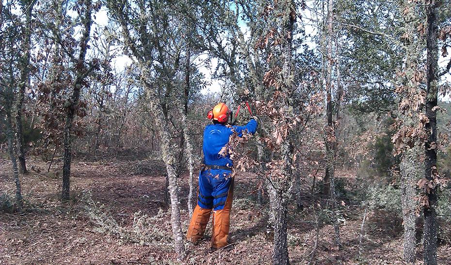 Un trabajador realiza tareas de mantenimiento de un espacio forestal.
