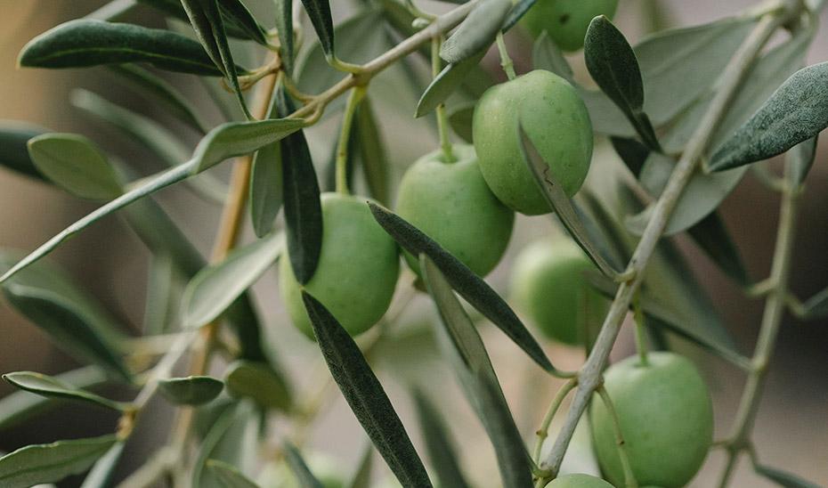 Andalucía celebra la suspensión de los aranceles al aceite y la aceituna