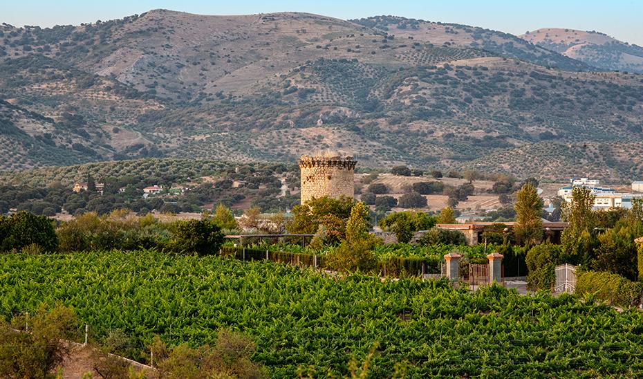 Una de las atalayas que forman parte del patrimonio alcalaíno asoma entre los viñedos de Alcalá la Real. (Foto: Ayto. Alcalá la Real)