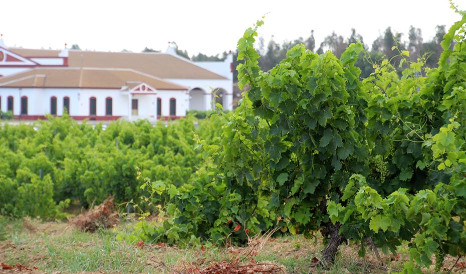 Una bodega y sus viñedos a las afueras de Villalba del Alcor.