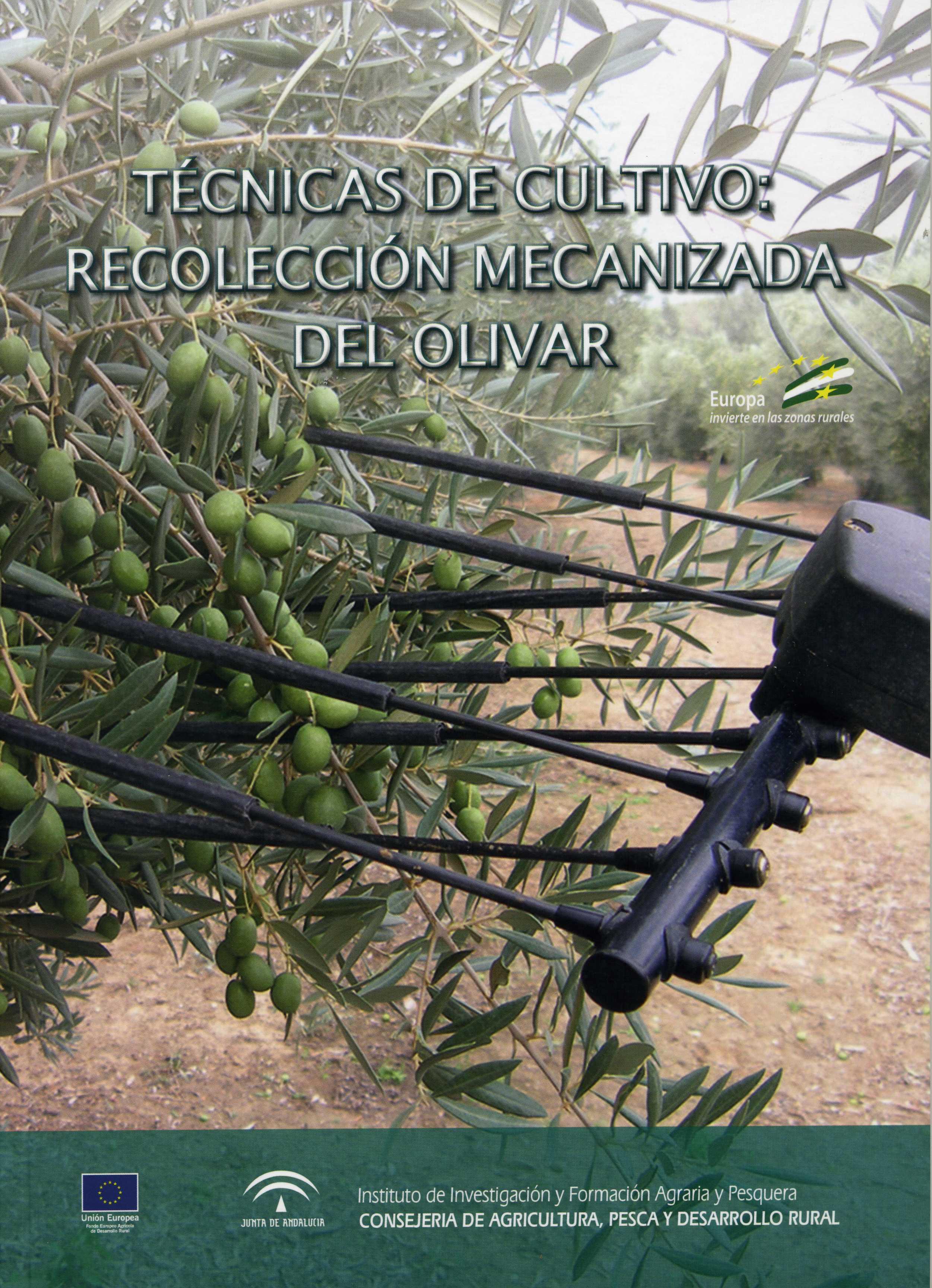 recolección mecanizada de olivar 2017.jpg
