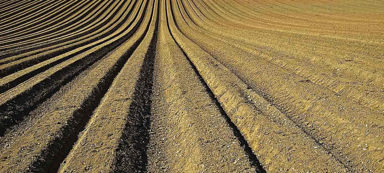 Campos de cereales en Andalucía